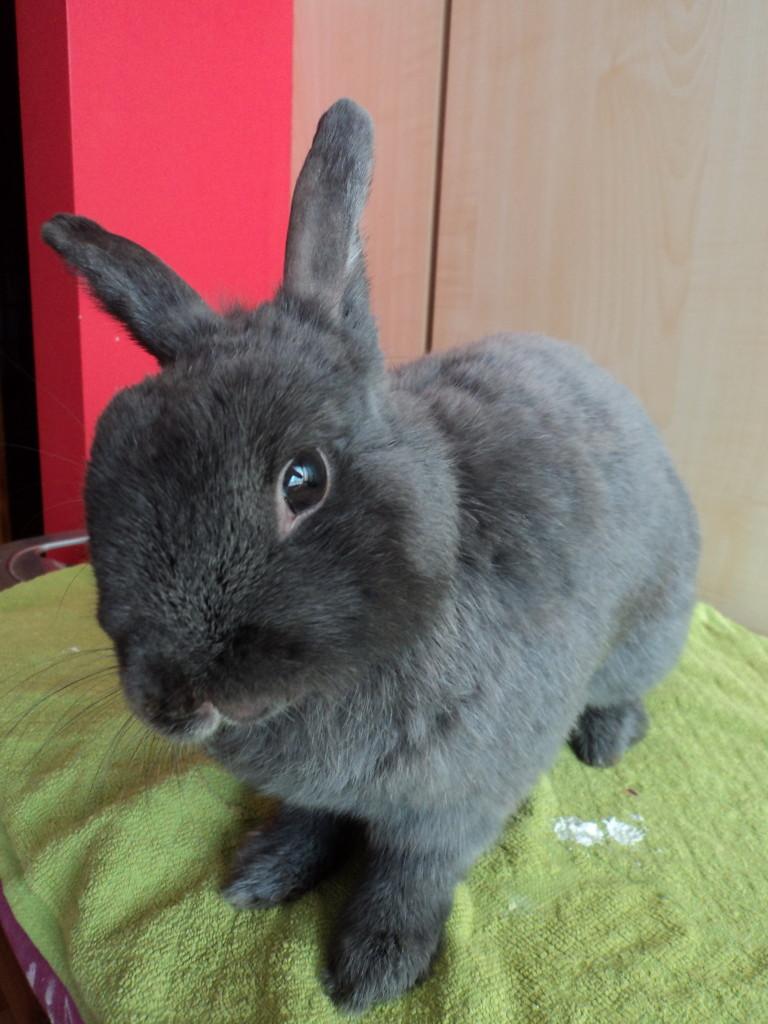 azyl dla królików